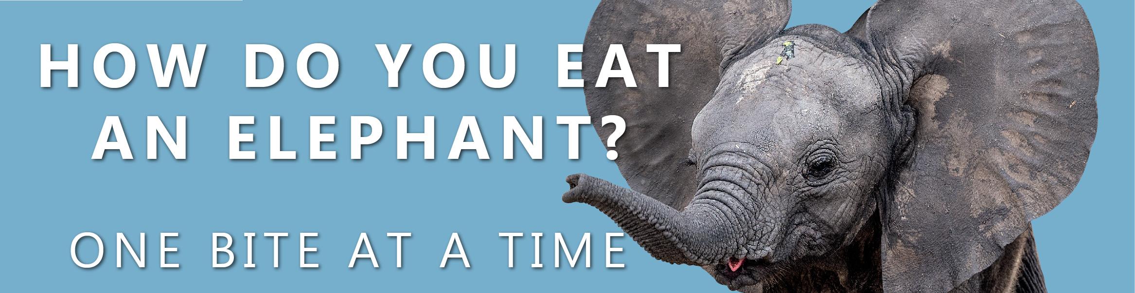 how do you eat an elephant - Cogo Capital