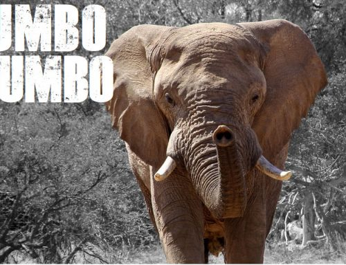 Jumbo Mumbo: Don't Size Yourself Out of Success